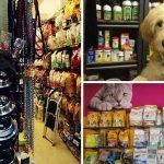 Top Pet Shops in Chandigarh